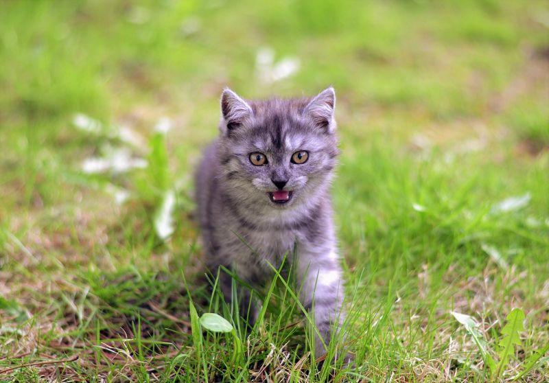 gattini-social